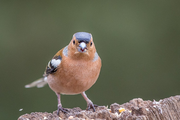 Birds (7 of 11)