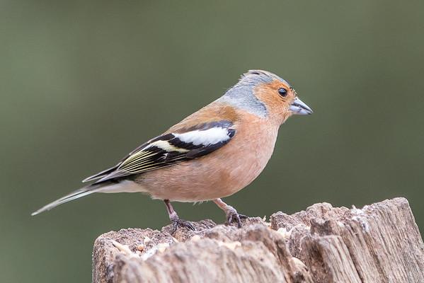 Birds (1 of 11)