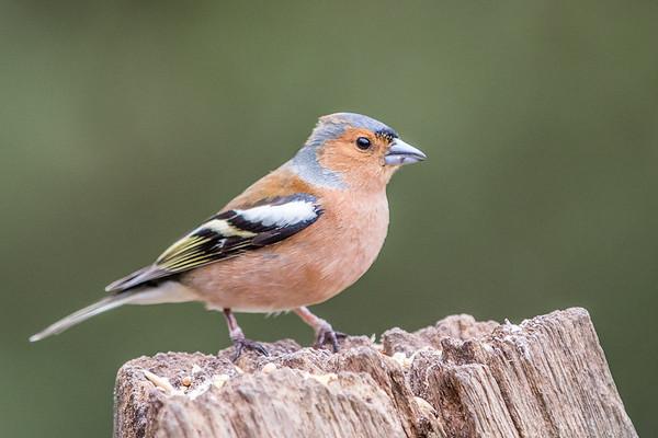 Birds (2 of 11)