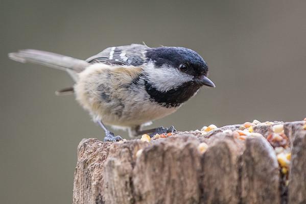Birds (8 of 11)
