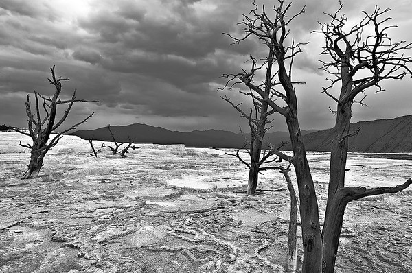 Yellowstone Springs at Yellowstone National Park (Black & White)