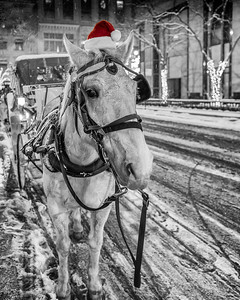 The Christmas Horse