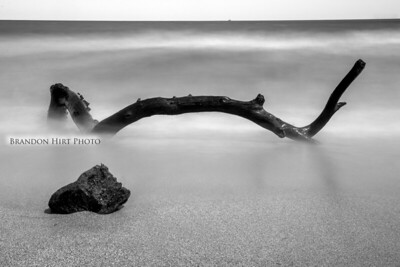 Lake Erie Driftwood