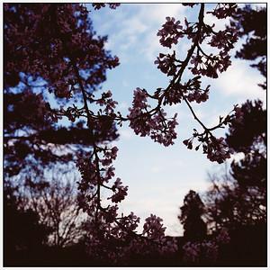 heath field gardens - shirley - croydon - spring