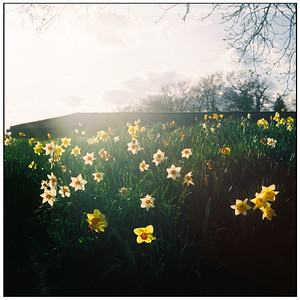heath field gardens - shirley - croydon - spring