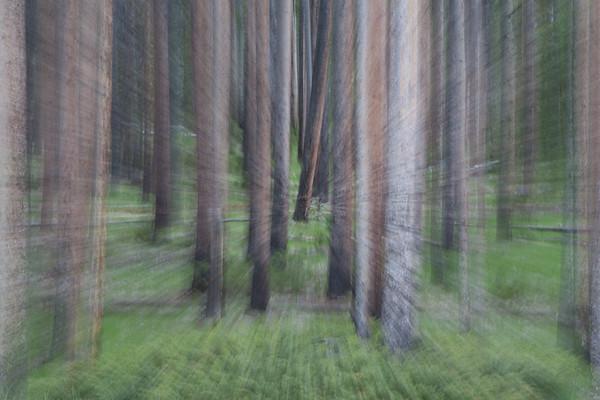 Dreaming In Trees II