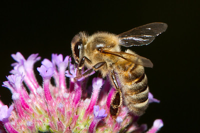 Bee Feeding II