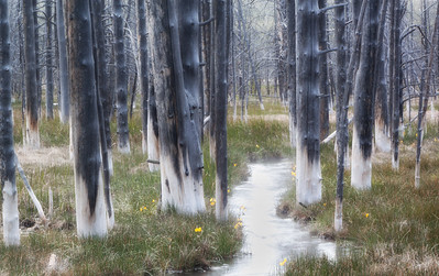 Tranquil Trees