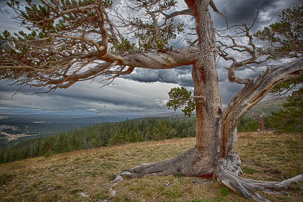 Stormy Yoga Tree
