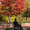 Autumn on Mercer's Atlanta campus