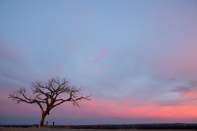 Lone tree on the road to Taos (4)
