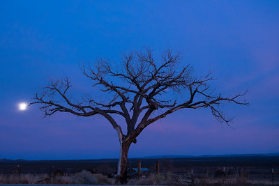 Lone tree on the road to Taos (2)