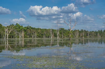 Reflection of trees in Neak Pean lake, Angkor