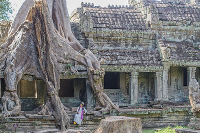 Tree covered ruins in Preah Khan temple, Angkor