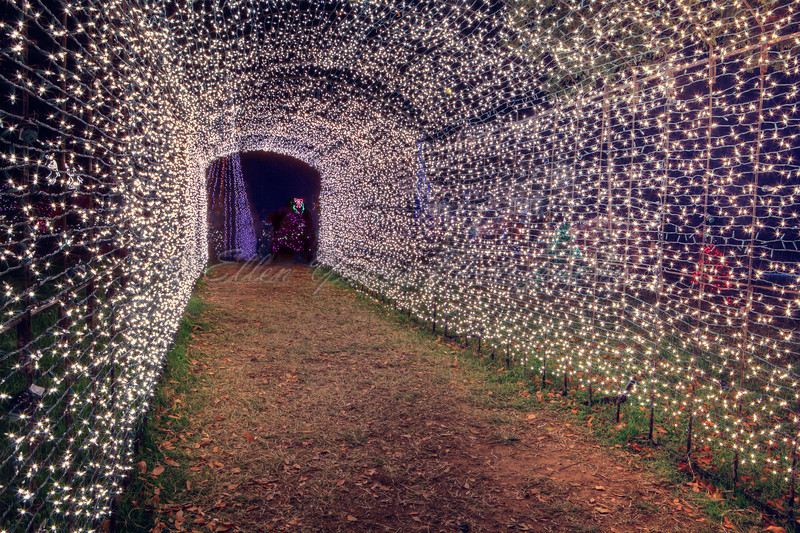 Tunnel of the Lights