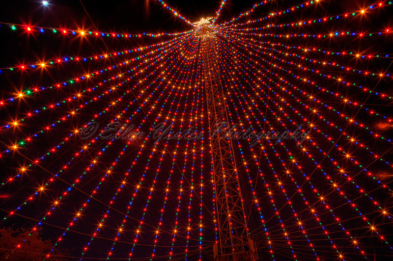 The Zilker Park Christmas Tree