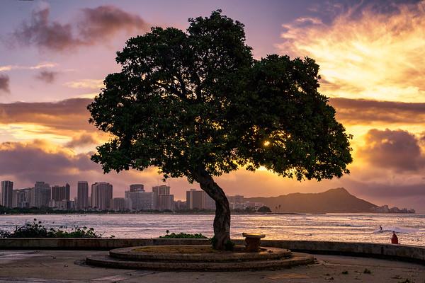 Tree of Kaka'ako