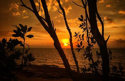 Stormy Ocean Sunrise Through the Mangroves