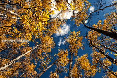 Summit County Aspens