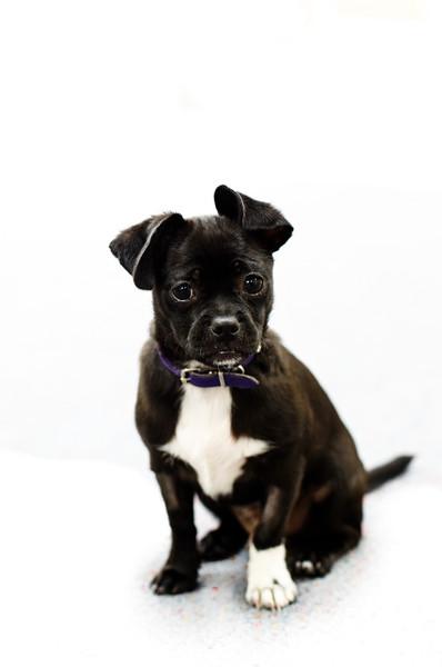 Puppy Portraiture