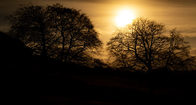 Yellow sun over dark trees