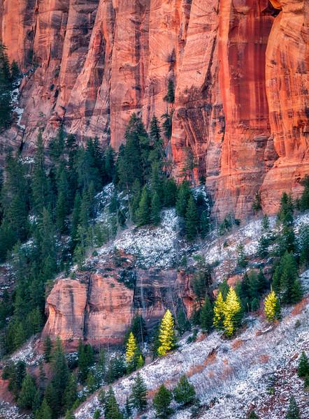 Spot-lit Trees, Kolob Canyons