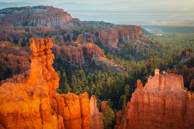 Bryce Canyon Trees in Morning Light