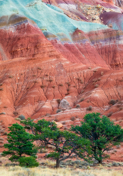 Capitol Reef NP Waterpocket Fold Trees