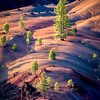 Pines and Painted Hills