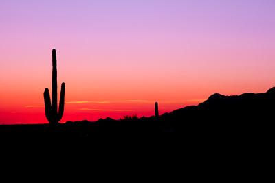 Lone Saguaro