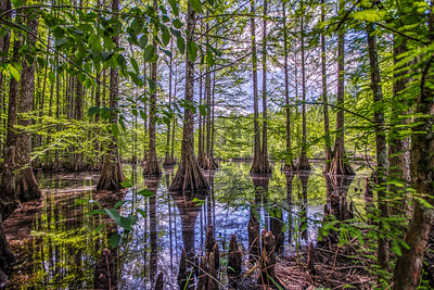 Nuxbee National Wild Refuge, Mississippi