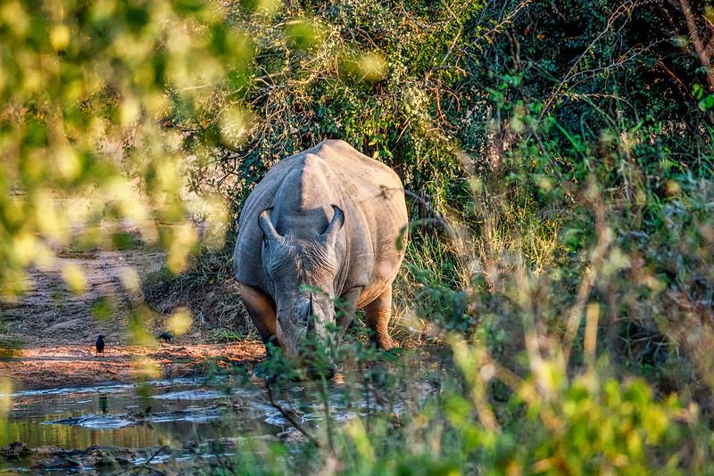 Lukimbi National Park, South Africa