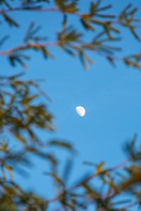 Mesquite Moon I