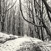 tree canopy bw