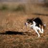 Max running pastel