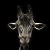 giraffe fractal