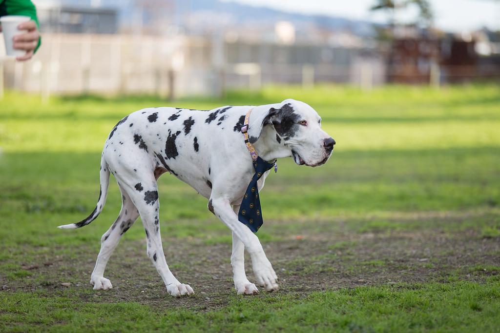 Dog Necktie Photoshoot in Richmond, California