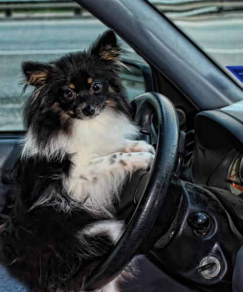 I am Driving...