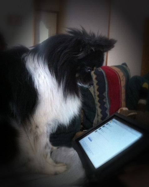 Smokey is reading Flickr 's comment on IPad2