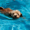 Puppy Swimming