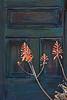Door and Flowers: Tucson, AZ (Feb 2011)