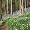 Langdon Woods in Spring