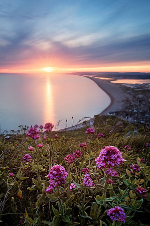 Chesil in Bloom