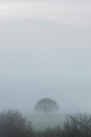 Devon Fog
