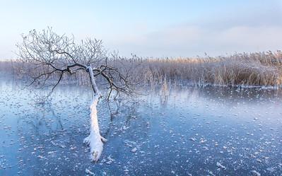 Fallen in ice