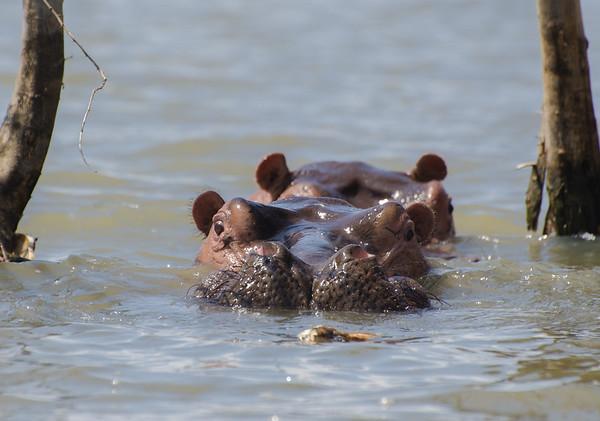 Hippo look