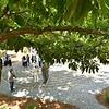 Interfaith Prayer Garden