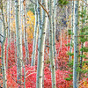 Autumn Kaleidoscope and Aspens, Lee Vining