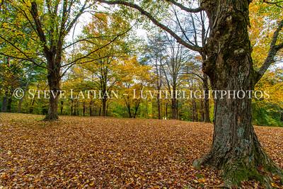 Fall at Bernheim