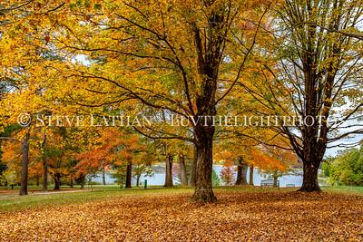 Hues of Fall